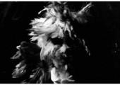 Cocosuma – The Jar – Single – Le Clip